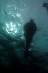 Disfruta del mundo del submarinismo en Castro Urdiales