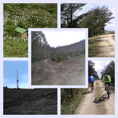 """En la subida nos podemos encontrar con el ganado """"monchino"""" que pacen por los montes castreños. Al llegar a la cima puedes contemplar los distintos refugios que abundan en la zona"""